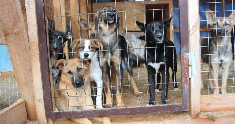 Rescue dogs living on a shelter.