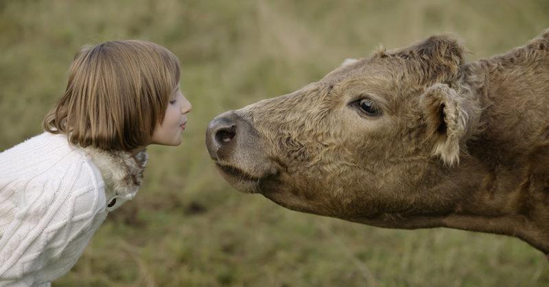 Pieni tyttö antamassa hellän pusun lehmän turvalle.