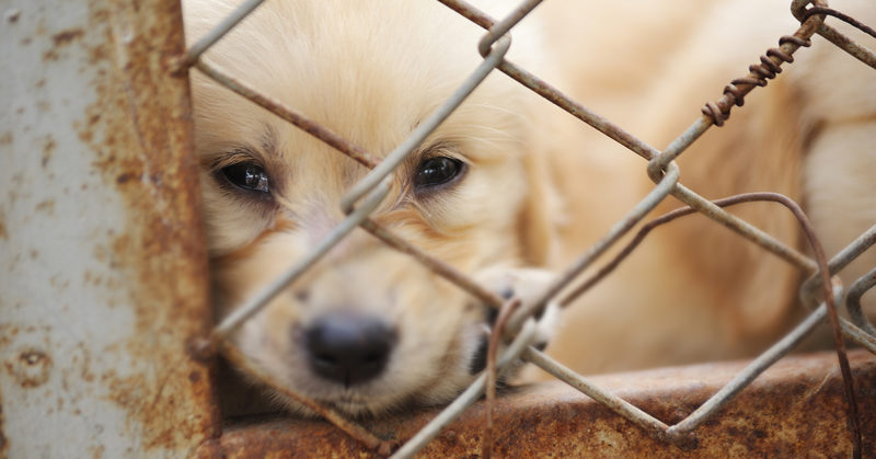Yksinäinen koira häkissä.