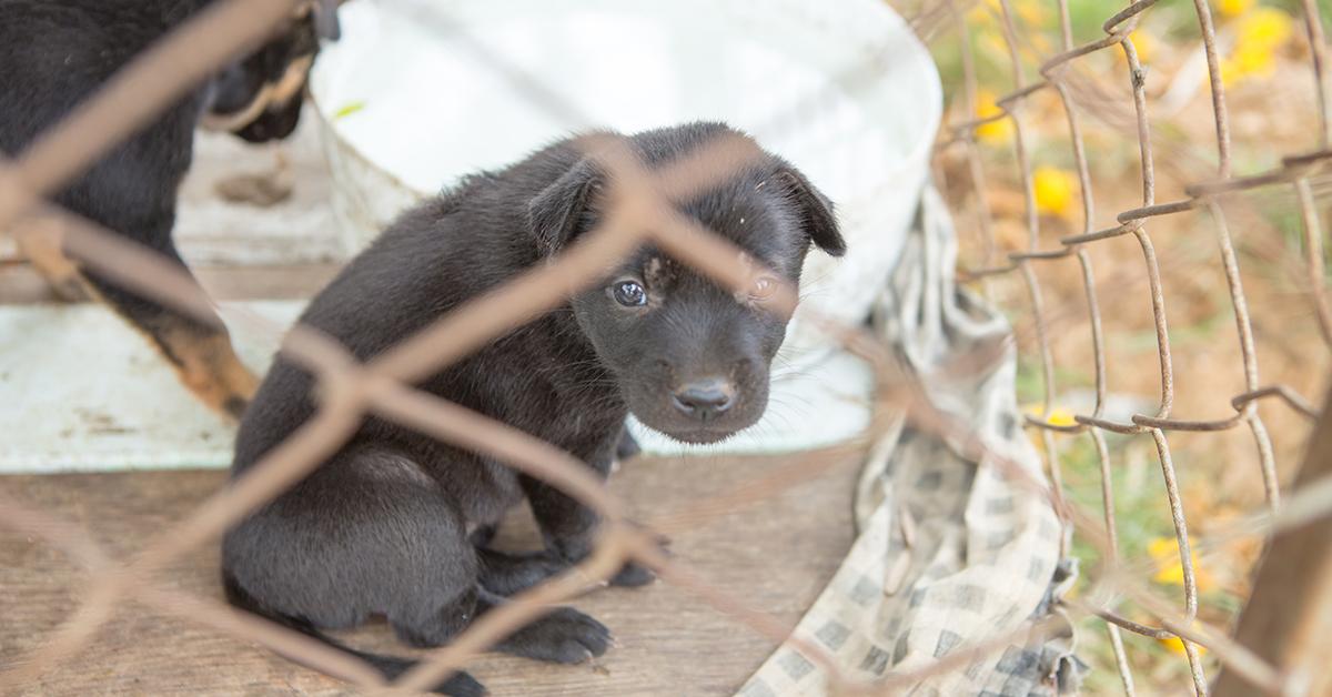 Helsingissä useimmat eläinsuojelurikkomukset liittyvät lemmikkieläimiin. Kuvassa koiranpentu häkissä.