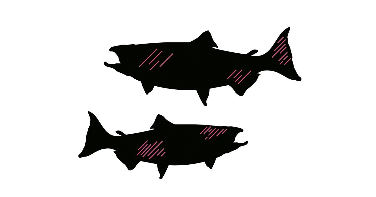 Korkeassa kalatiheydessä esimerkiksi kalojen evät voivat kulua.