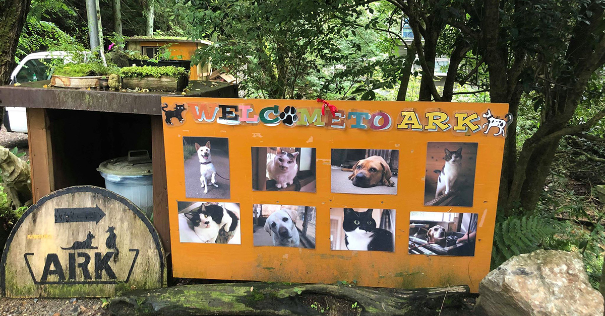 ARK welcoming sign shows photos of abandoned dogs and cats.