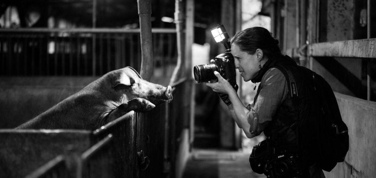 Jo-Anne McArthur kuvaa sikalassa.