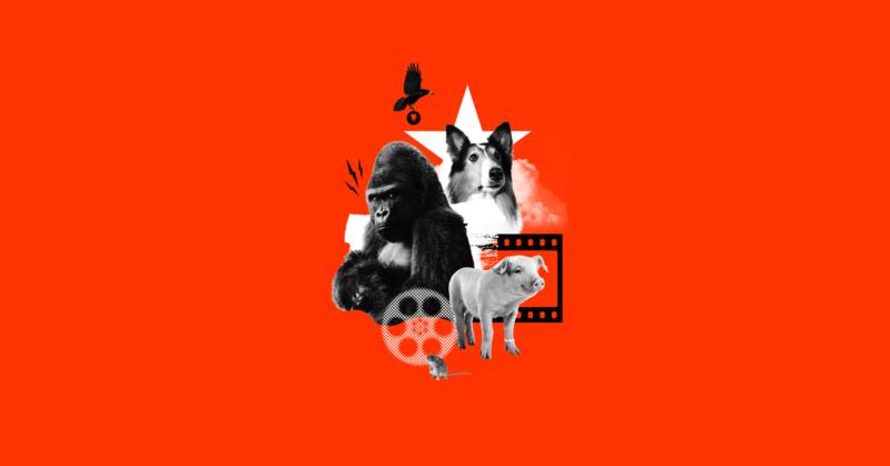 Hyvät, pahat ja ihmismäiset. Kuvassa gorilla, koira ja sika.