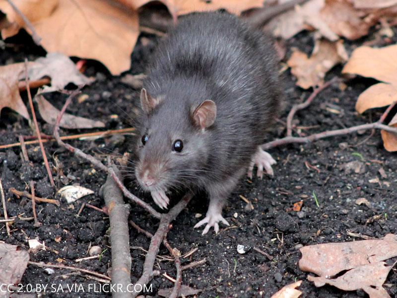 Kuvassa rotta syksyisissä maisemissa.