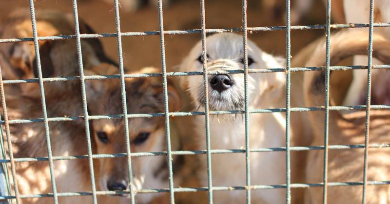 Kauan odotettu eläinsuojelulaki hyväksyttiin Venäjällä. Kuva on otettu Viipurista koiratarhalta.