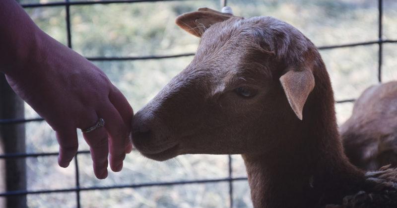 Eläinoikeusliikkeen uudistajan Kim Stallwoodin työtä ohjaa myötätunto.