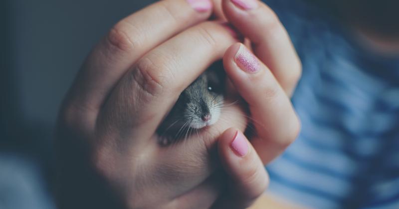 Koti kirkkaaksi ilman eläinkokeita.