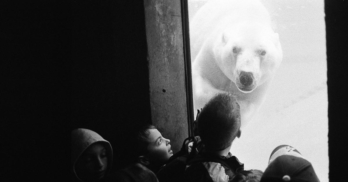 Lapset katsovat jääkarhua suojalasin takana.