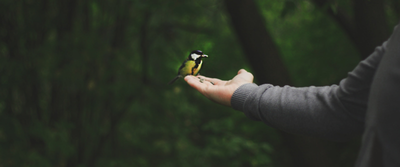 Eläinsuojelu ja luonnonsuojelu sata vuotta myöhemmin. Kuvassa lintu kämmenellä.