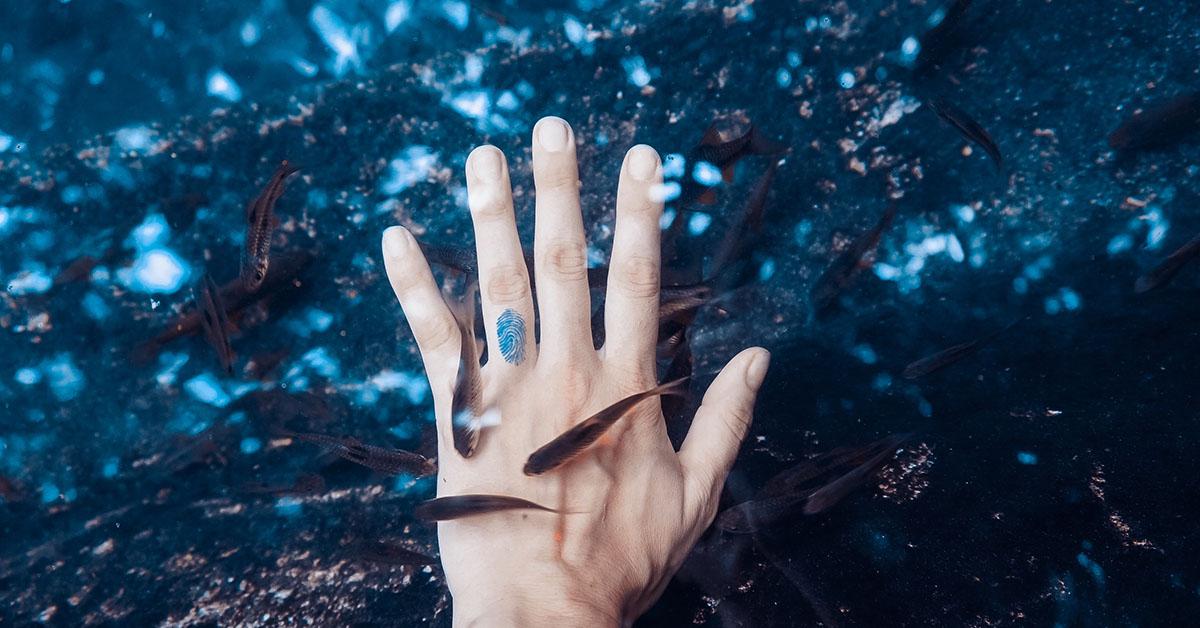 Puhdistajakalat uivat ihmisen käden ympärillä.