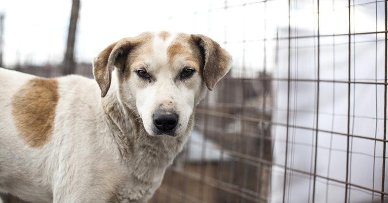 Eläinten oikeuksien puolesta. Kuvassa koditon koira.