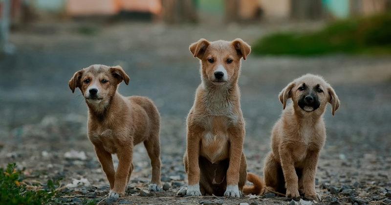 Three abandoned puppies.