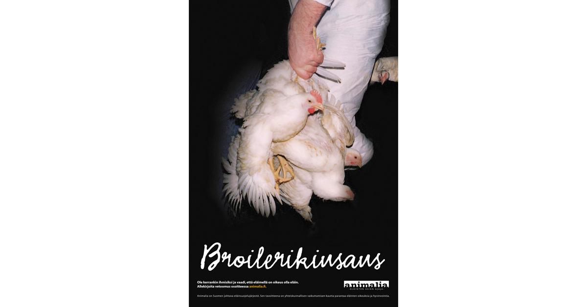 """Julisteessa lukee """"Broilerikiusaus"""". Siinä eläintuotannossa työskentelevä henkilö pitää broileita kiinni jaloistaan, joten eläimet roikkuvat pää alaspäin."""