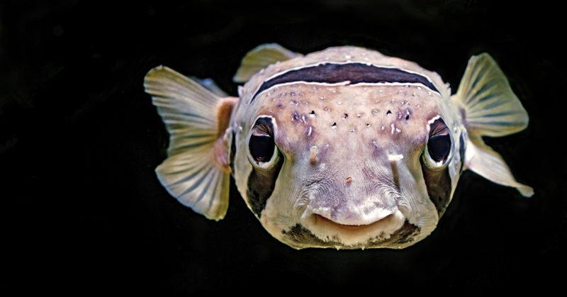 Kalojen salainen elämä. Kuvassa kala lähietäisyydellä.