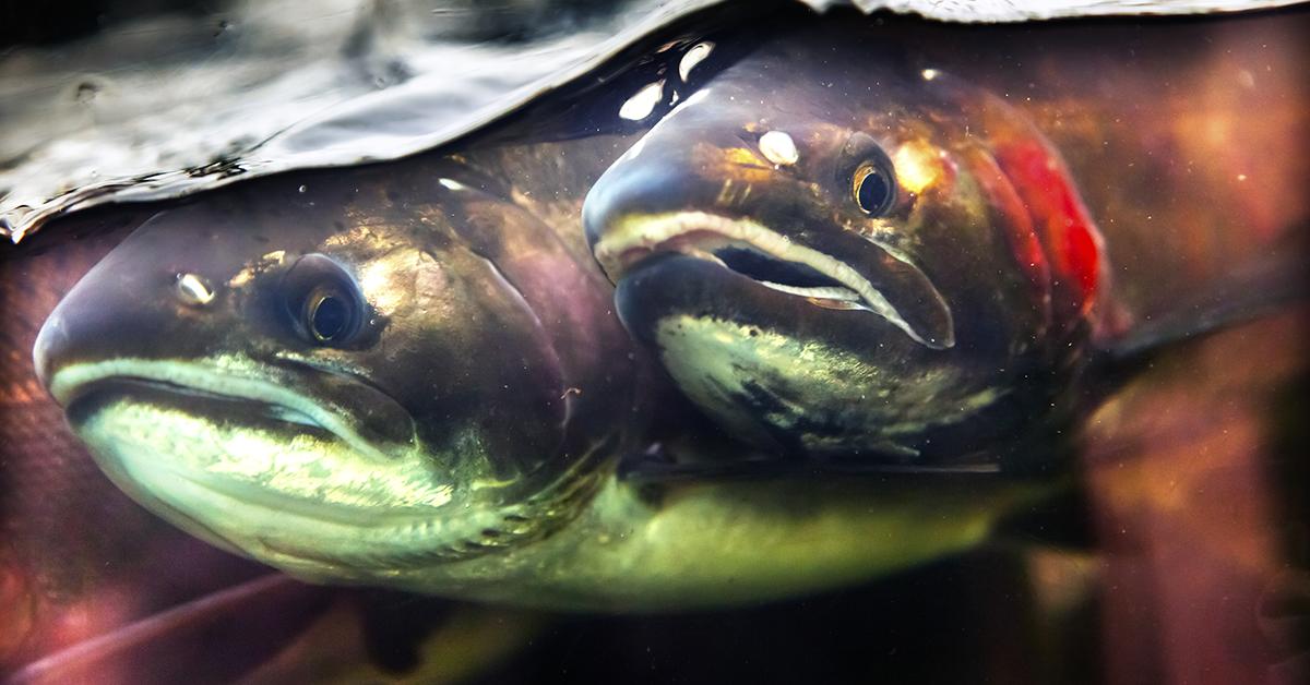 Fiskar i ett trångt utrymme.