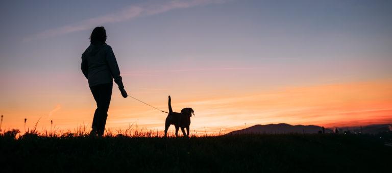 Ihminen ja koira kävelevät auringonlaskussa.