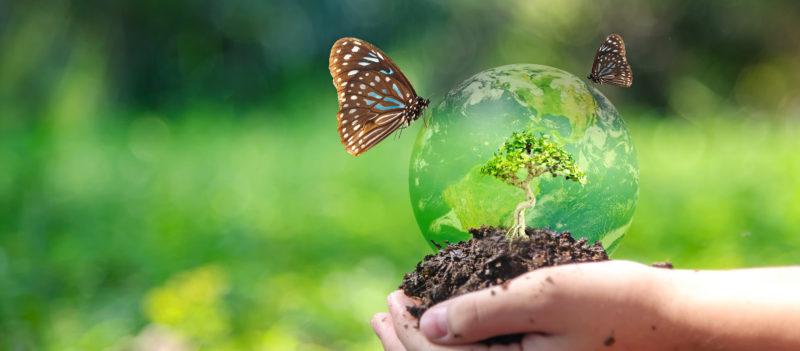Kämmenellä on pieni maapallo, jonka päällä seisoo kaksi perhosta.