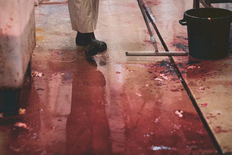 Siivouslastalla puhdistetaan veristä teurastamon lattiaa.