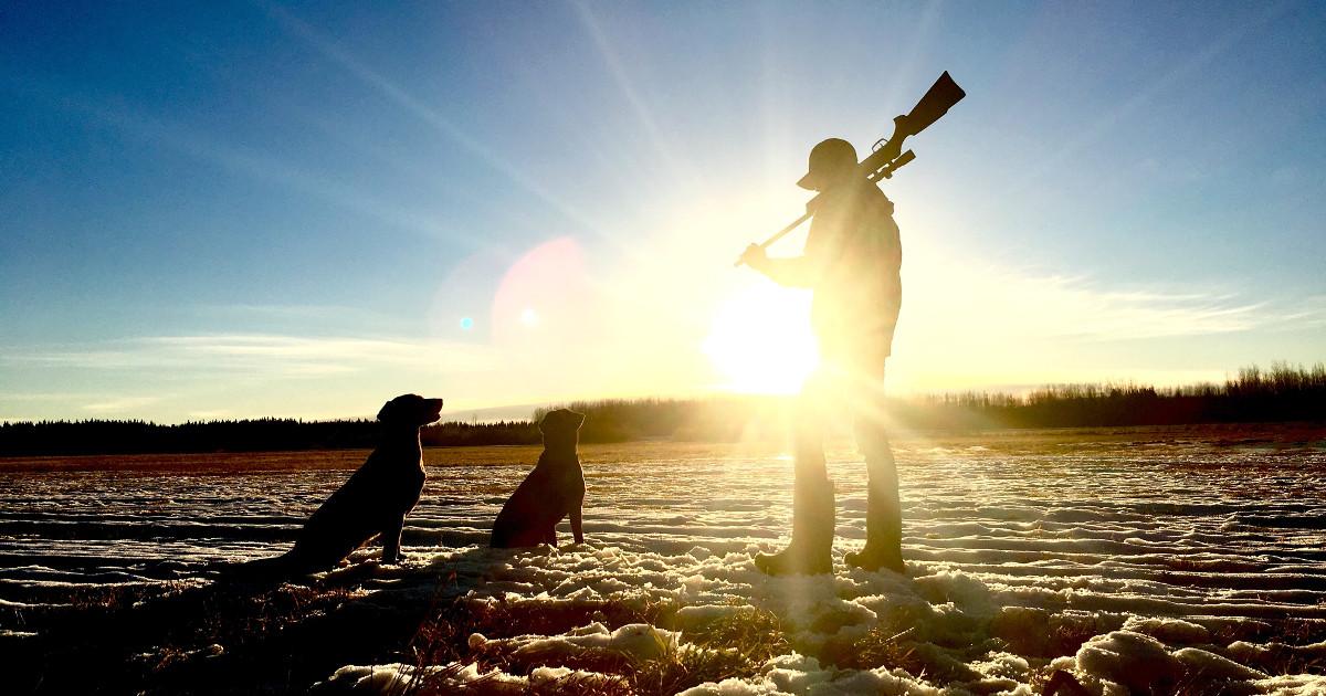 Metsästäjä seisoo pellolla kivääri olallaan kahden koiran kanssa.